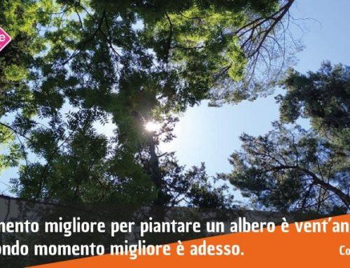 Patrimonio verde e progetti di cittadinanza attiva: partiamo dagli alberi per ripensare  l'ambiente urbano